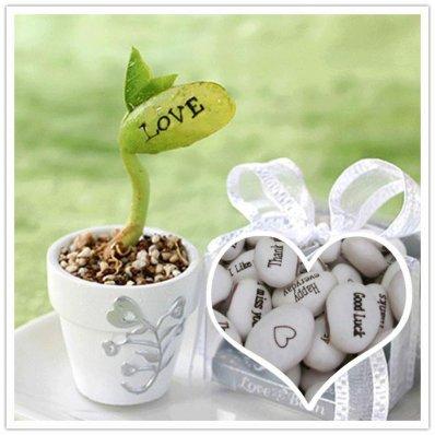Fasolka LOVE w doniczce - doskonały sposób na wyznanie miłości