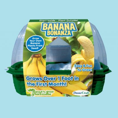 Domowa hodowla Banana Bonanza - wyhoduj sobie banana!