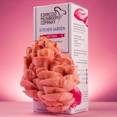 Domowa hodowla różowych grzybów